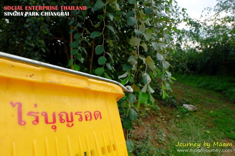 Social Enterprise Thailand_Singha Park_3