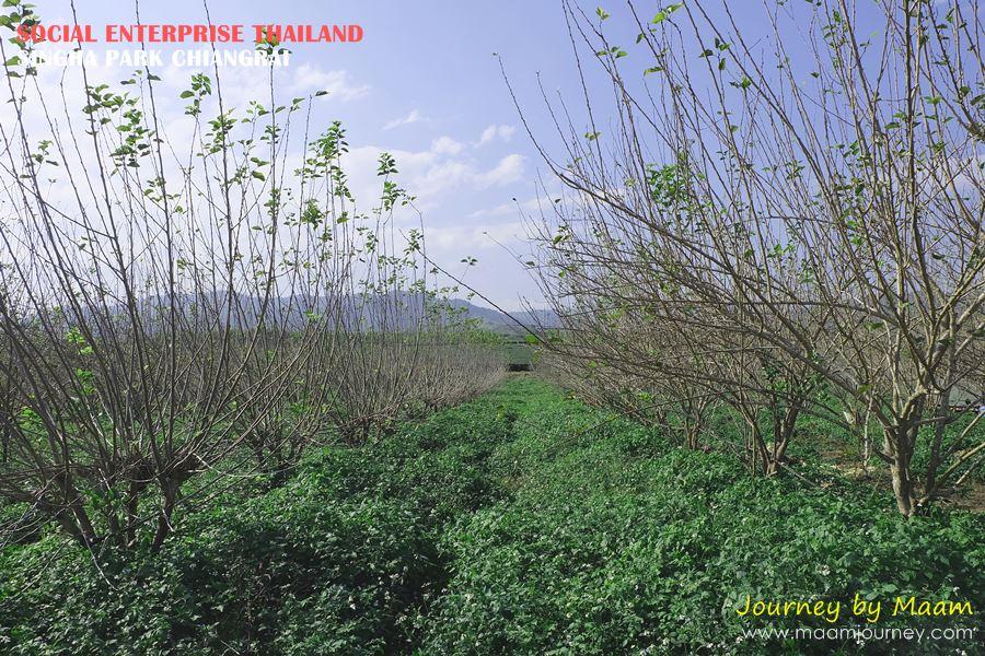 Social Enterprise Thailand_Singha Park_8