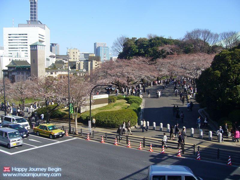 Sakura_Kitanomaru Park