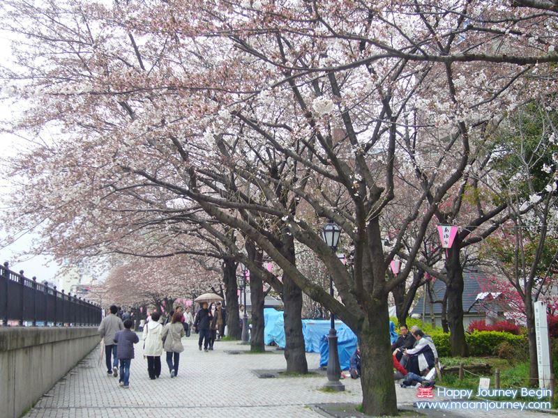 Sakura_Sumida Park