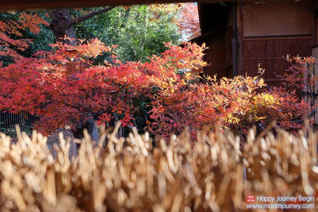 Autumn-Color-Leaf