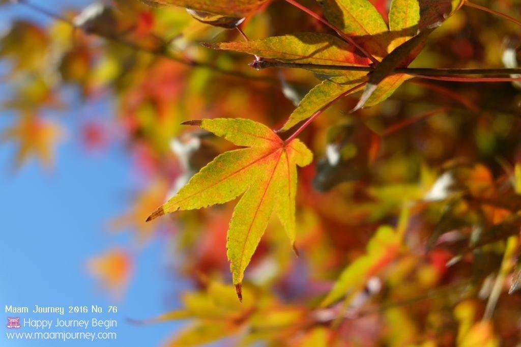 Autumn-Color-Leaf_1