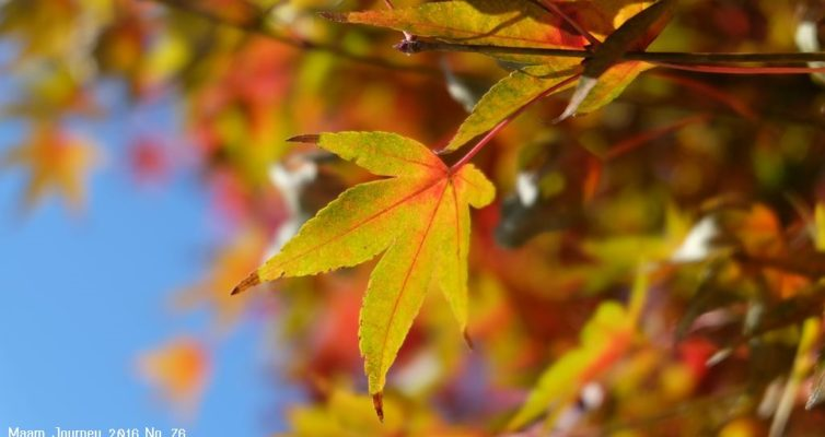 Autumn-Color-Leaf_1