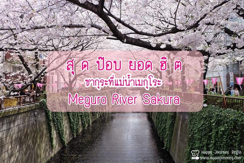 Cherry Blossom_meguro
