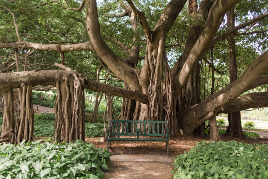 City Botanic Garden 01