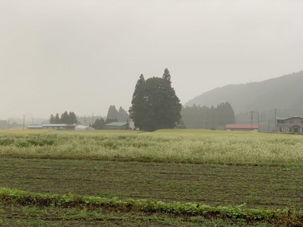 DSCF8174 Totoro no Mori
