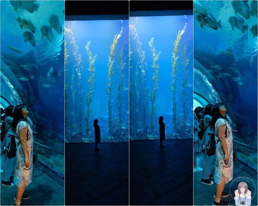 Pingtung_Aquarium