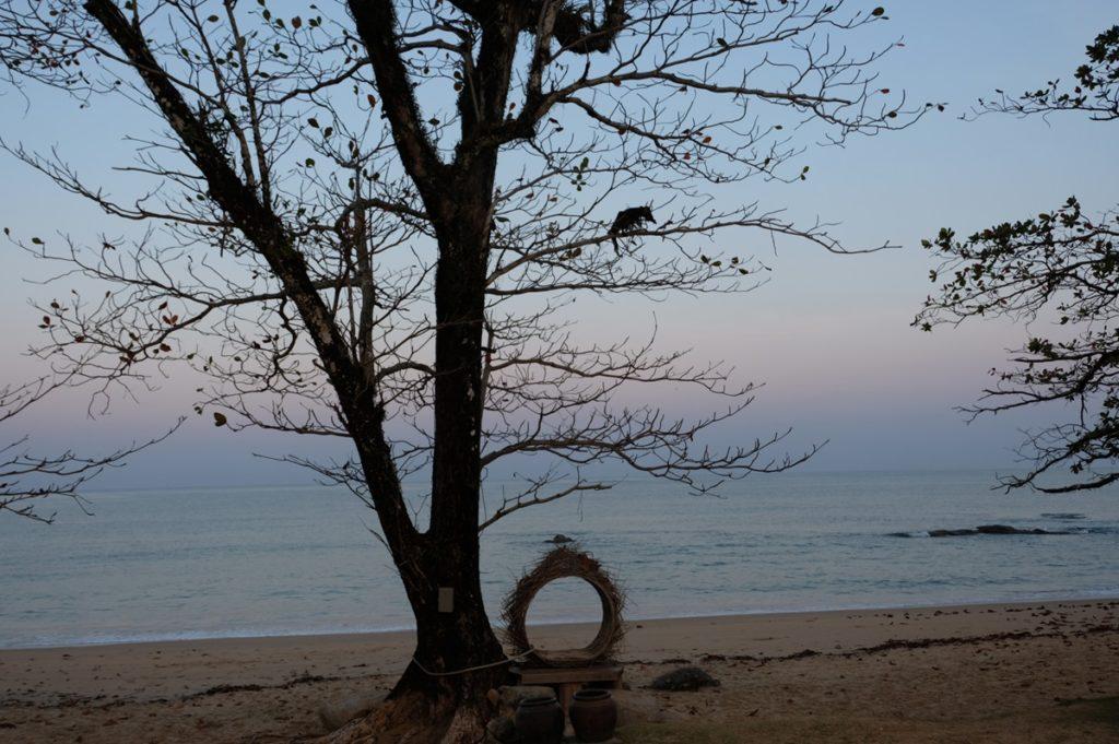 มีรังนก สำหรับถ่ายรูปด้วย แสงเช้าสวยดี