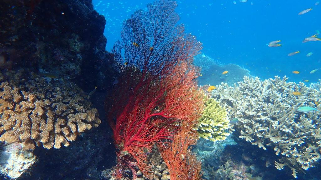 ปะการังสีสวยเชียว