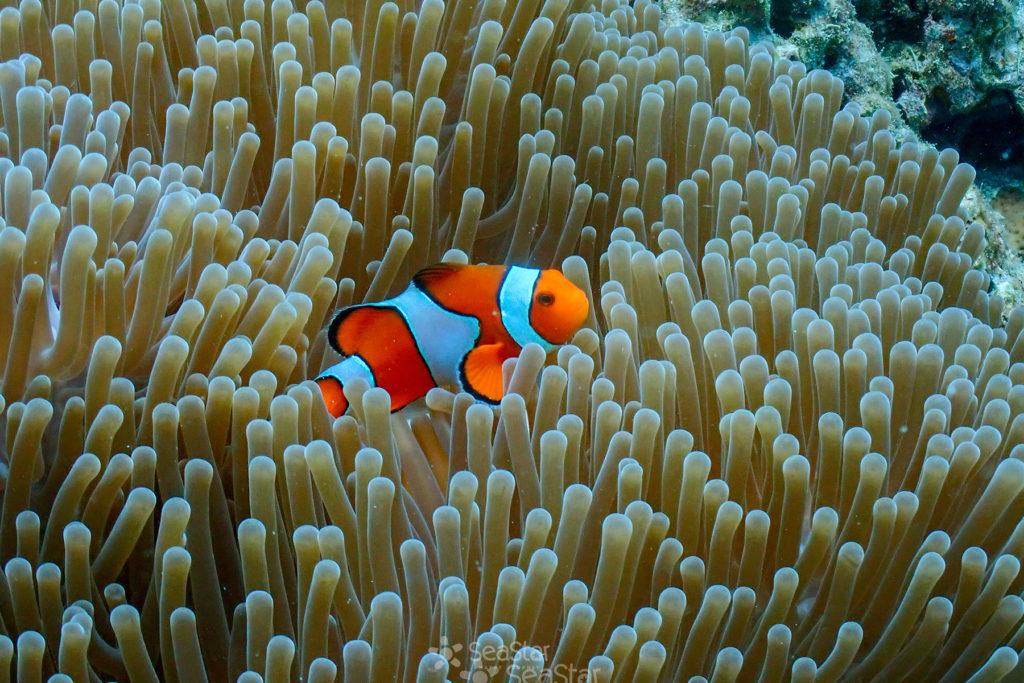 ปลากับปะการัง น่ารัก