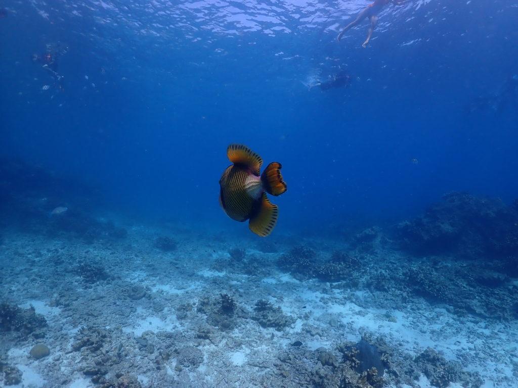 ปลาน่ารักมาก